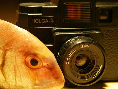 Fish-Eye / Ochi de peste