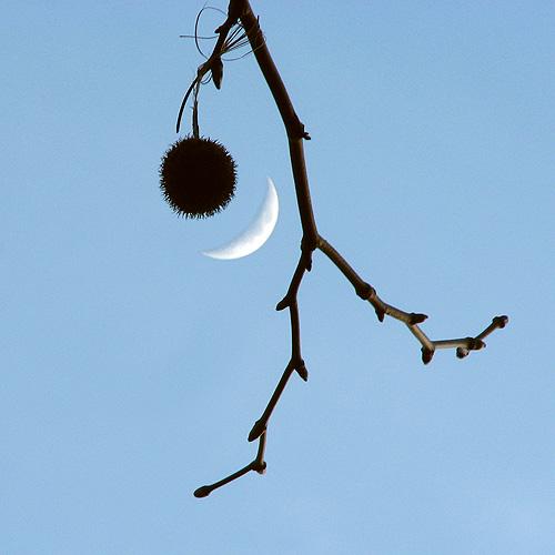moon under bauble