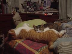 [柳丁] 你是我的抱枕 (4)
