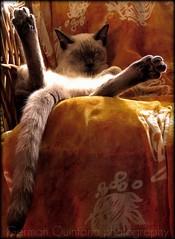 G e r m á n - .la hora de la siesta (Flickr)