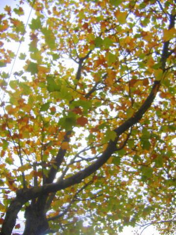 Autumn Patterns