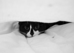 85 - Under the covers