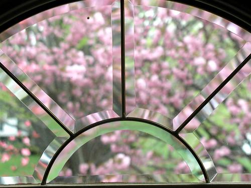 tree through window 1