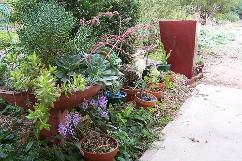 The Succulents by the front door