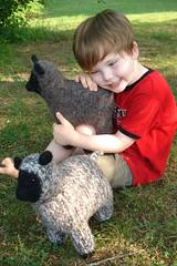 sheepy love