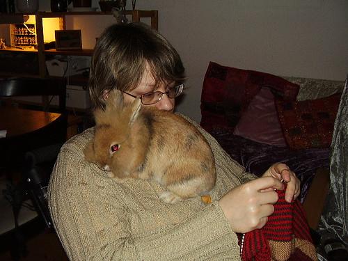 kanin på hylde