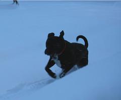 snowdogapril