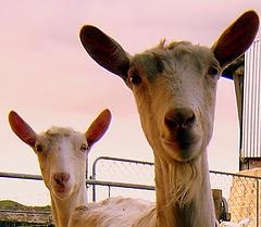 Photo by flickr user Essjay NZ