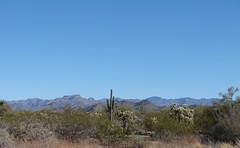 Saguaro and teddy bear cholla with mountains i...