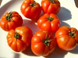 Marmandino Tomaten