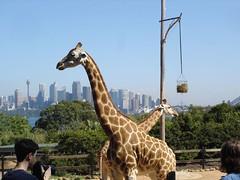 Taronga Zoo (2)