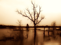 My Own Nightmare, by Infinity Rain @ Flickr