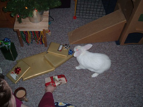gussy examining presents