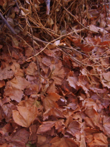 Leaves and Twigs