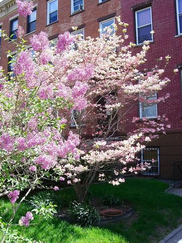 Carroll Gardens In Bloom