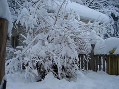 Molly's Snow Den