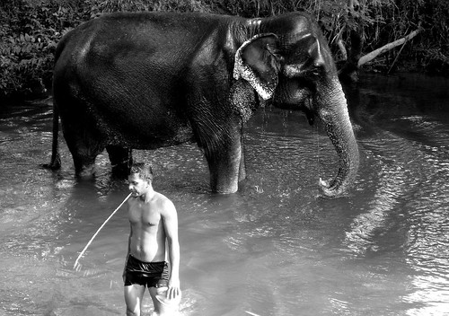 elephant and the mahout spit