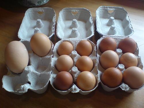 The eggs