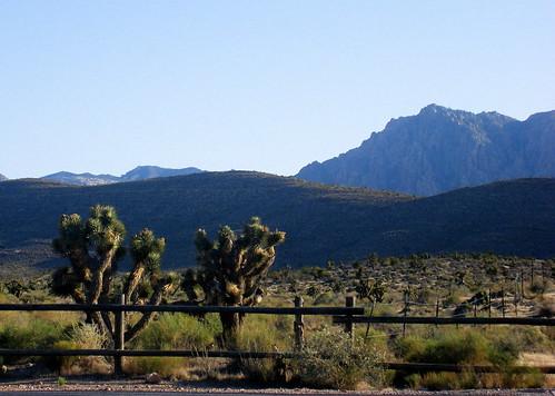 Joshua Trees at Red Rock Canyon