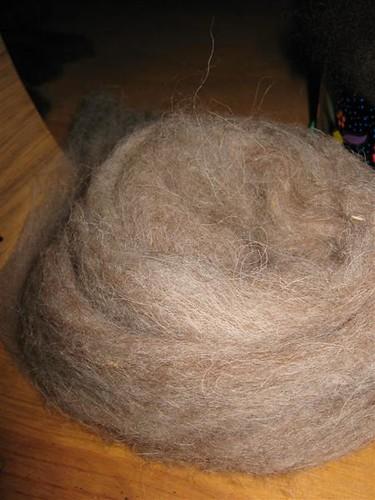 kinda hairy shetland