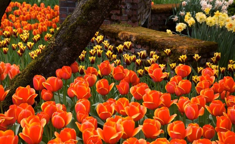 TulipsFireplace.jpg