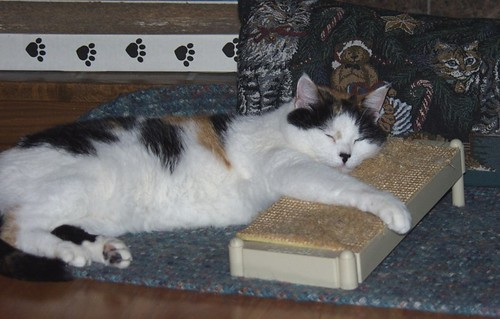 Katie Napping by Lady Birchwood