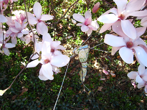 traveling sock among the magnolias