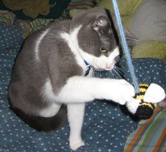 Bumble cat toy