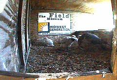 Waukeegan Webcam Capture 2