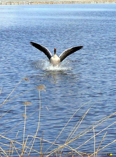 Goose Landing, Örebro