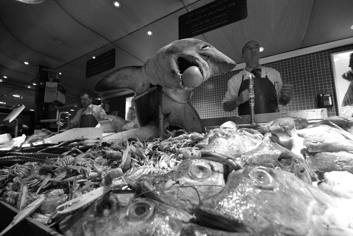 A shark at Kay O'Connell's fishmongers
