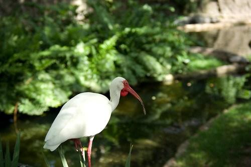 Busch Gardens-3.jpg