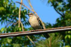 Bird on a PowerLine