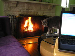 Day 2: Now THIS is what I call telecommuting...