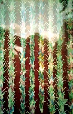 1000 paper cranes