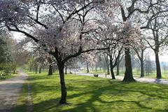 London - Part 1A 017 - Hyde Park