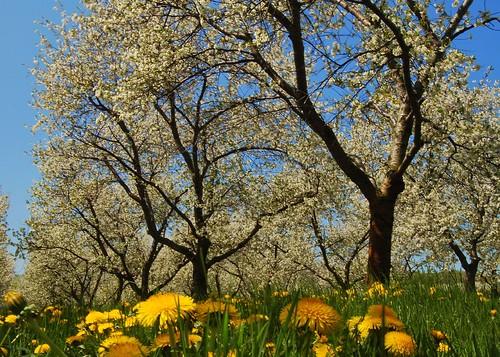 Pollen Heaven by {D}