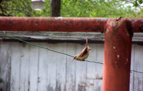 Bird on a Wire 2