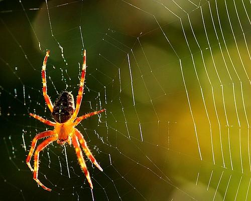 spider and web por novon.