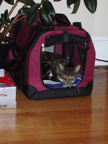 Diggin' Her New Carrier