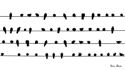Bird Score