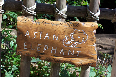 Asian Elephant Sign