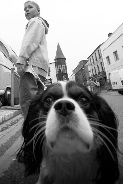 The curious dog