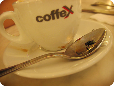 Fly on espresso