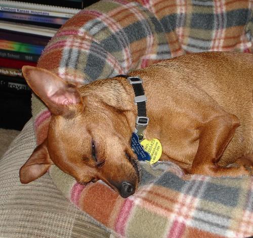 Tired Ginger