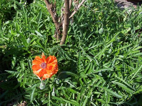 Poppy Bush