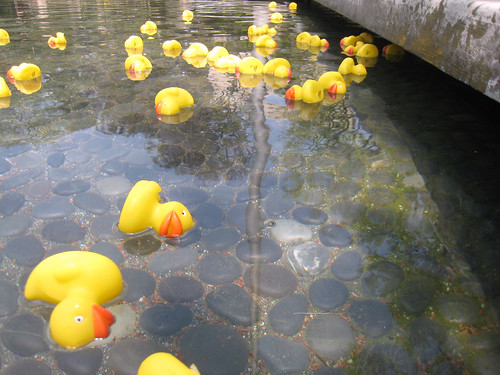 Rubber ducks of questionable seaworthiness