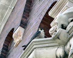 St. Michael's Female