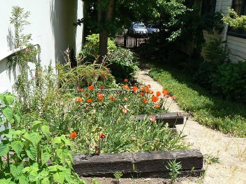 Caio II Garden