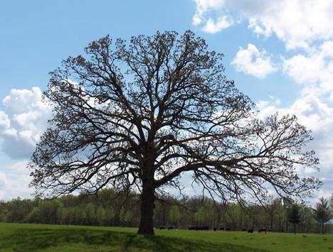 Open Tree